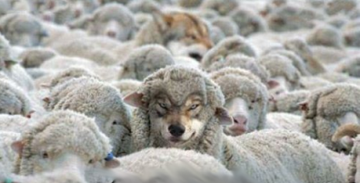 Wolf in sheeps clothing6
