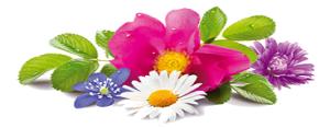 Wild-Flowers-343x1781074-735717
